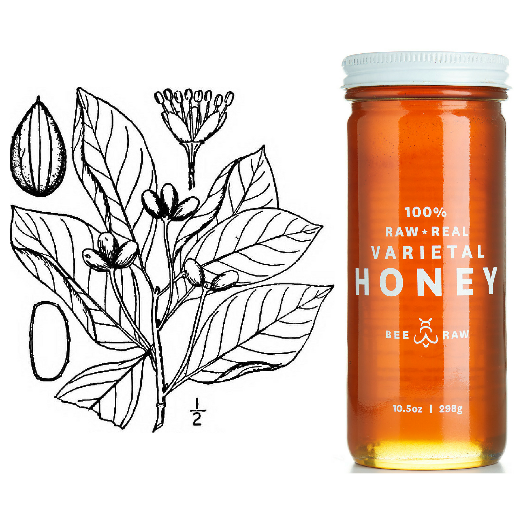 Nyssa ogeche Tupelo Honey.png