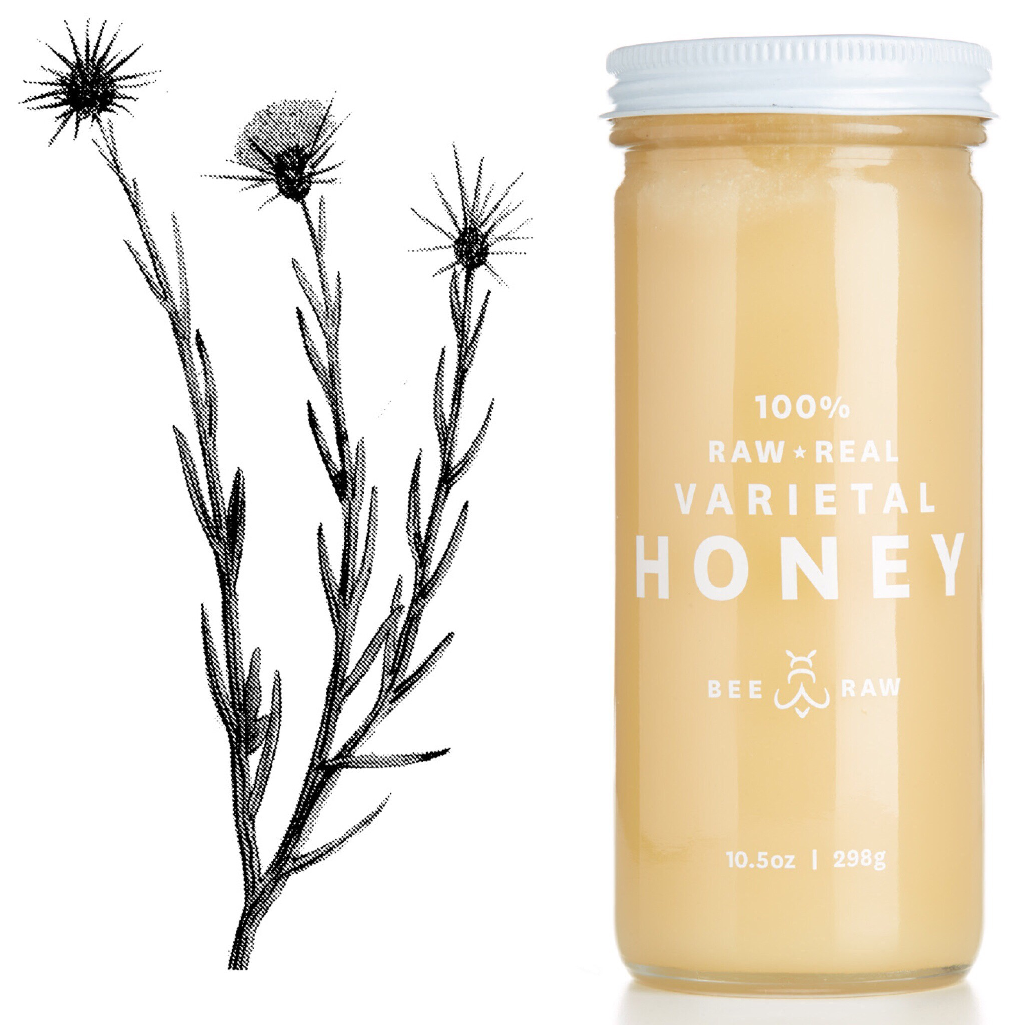 Star-Thistle-drawing-with-jar.jpg