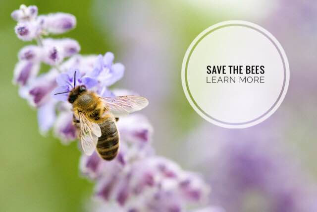 save-the-bees-learn-more