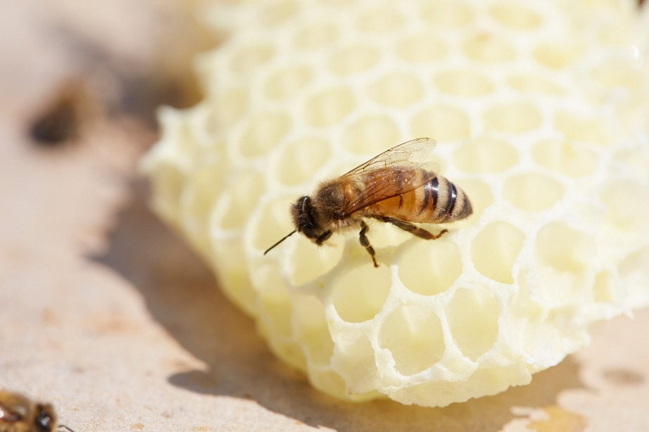 bee-on-comb-1